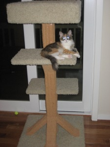Katinka and the new Cat Tree